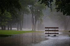 Rain image of rain in a park