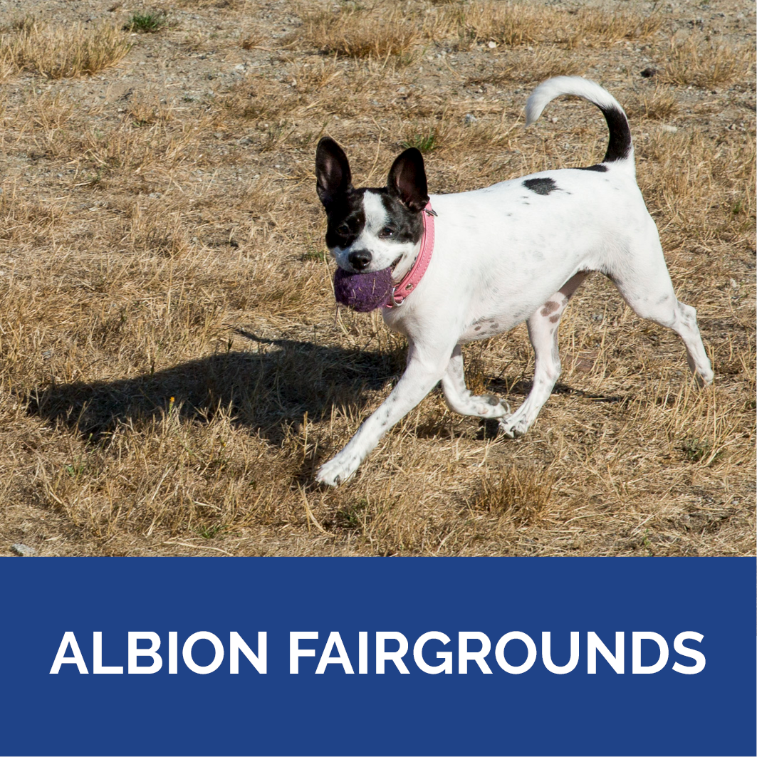 Dog Park Albion Fairgrounds